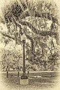 Live Oaks Digital Art - City Park Live Oaks sepia by Steve Harrington