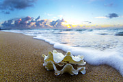 Seashell Art Prints - Clam foam Print by Sean Davey
