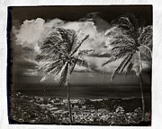 Landscape Photograpy Framed Prints - Classic Island Palms Framed Print by Perry Webster