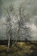 Hugo Bussen - Classic scene of a birch...