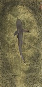 Sharks Paintings - Clear a path  by Nick  Oneill