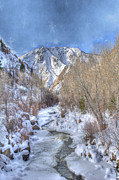 Ice Trees Prints - Clear Creek in the Winter Print by Juli Scalzi