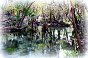 Palmettos Prints - Clear Florida Springs Print by Carol Groenen