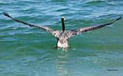 Michelle Wiarda - Clear For Takeoff