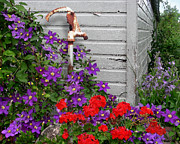 Shed Metal Prints - Clematis Cascade Metal Print by Doug Kreuger