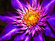 Dramatic Digital Art - Clematis Flower in Blue by ABeautifulSky  Photography