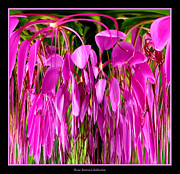 Rose Santuci-sofranko Posters - Cleome Flower Abstract Poster by Rose Santuci-Sofranko
