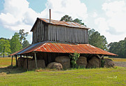 Gray Building Framed Prints - Clewis Family Tobacco Barn Framed Print by Suzanne Gaff