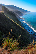 Big Sur Posters - Cliff Grass at Big Sur Poster by Adam Pender