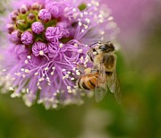Honey Bee Photos - Cliffhanger 2 by Fraida Gutovich