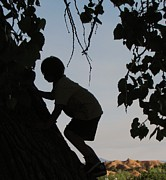 Feva  Fotos - Climbing First Tree-Priceless