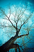 Old Trees Prints - Climbing Up To The Heavens Print by James Bo Insogna