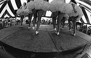 Photograph Art - Cloggers In The Park by Serge Seymour