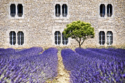 South France Posters - Cloister-lavender Poster by Joachim G Pinkawa