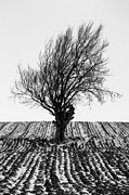 Ploughed Prints - Close tree in snow Print by John Farnan