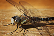 HJBH Photography - Close-up of a dragonfly