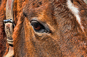Emotions Posters - Close up of a horse eye Poster by Paul Ward