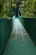 Carrie Cranwill - Cloud Forest Bridge