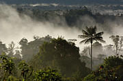 Andes Metal Prints - Cloud Forest in the Mist Metal Print by Pete Oxford