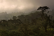 Rain Photo Originals - Cloud Forest Sunset by Matt Tilghman