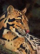 Wolf Painting Posters - Clouded Leopard Poster by David Stribbling