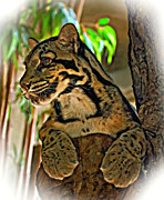 Painted Cat Posters - Clouded Leopard oil Poster by Steve Harrington