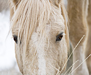 Palomino Photos - Clouds Eyes by Carol Walker