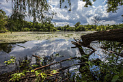 Nature Center Pond Photo Prints - Clouds on the Water Print by CJ Schmit