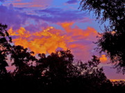 Evening Scenes Photos - Clouds by Pamela Cooper