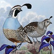 California Quail Paintings - Cloudy California Quail by Ande Hall