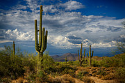 Southwest Landscape Metal Prints - Cloudy Desert Skies  Metal Print by Saija  Lehtonen