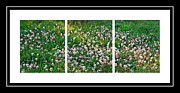 Flowers Scent Digital Art - Clover Triptych - Fragrant Flowers - Weeds by Barbara Griffin