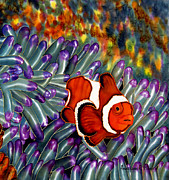 Anderson R Moore - Clown Fish In Hiding