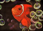 Warm Pastels Posters - Clown Fish in Hiding  Pastel Poster by Antonia Citrino
