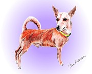 Animal Shelter Drawings - Clyde - a former shelter sweetie by Dave Anderson
