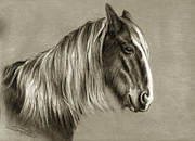 Draft Pastels Posters - Clydesdale in retirement Poster by Sara Cuthbert