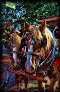 Carriage Horse Photos - Clydesdales - Want a Ride by Lee Dos Santos