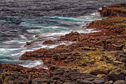 Galapagos Metal Prints - Coast Line Metal Print by Todd Bielby