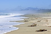 Mist Metal Prints - Coast of Pacific ocean in Canada Metal Print by Elena Elisseeva
