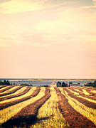Drying Art - Coastal Farm PEI by Edward Fielding