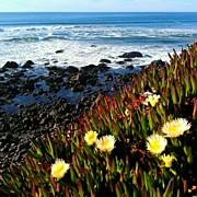 California Art - Coastal Flowers by CML Brown