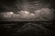 Melanie Lankford Photography - Coastal Grasslands