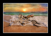 Log Digital Art - Coastal Morning  by Betsy A Cutler East Coast Barrier Islands