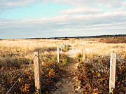Mashpee Prints - Coastal Trail Print by Brooke Ryan