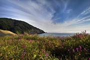 Ocean Scenes Posters - Coastal Wildflowers of Oregon Poster by Debra and Dave Vanderlaan