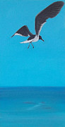 Flying Seagull Painting Framed Prints - Coasting Framed Print by Georgia Griffin