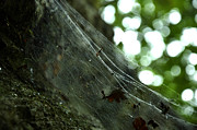 Patrizia Henderson - Cobwebs in ancient...