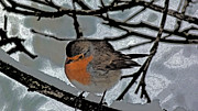 Jason Christopher - Cock Robin in Snow