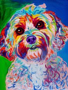 Alicia Vannoy Call Framed Prints - Cockapoo - Carmie Framed Print by Alicia VanNoy Call