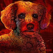 Dog Prints Digital Art Posters - Cockapoo Dog Poster by Marlene Watson